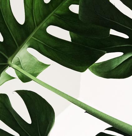 Пальмовые листья фото