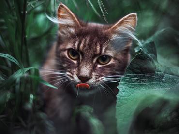 Серый кот с одним глазом