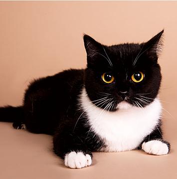 здоровый кот