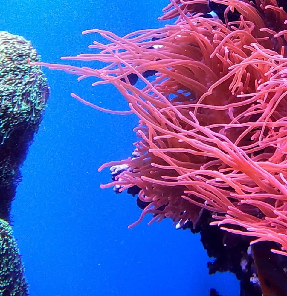 домашний морской аквариум одесса фото cлева