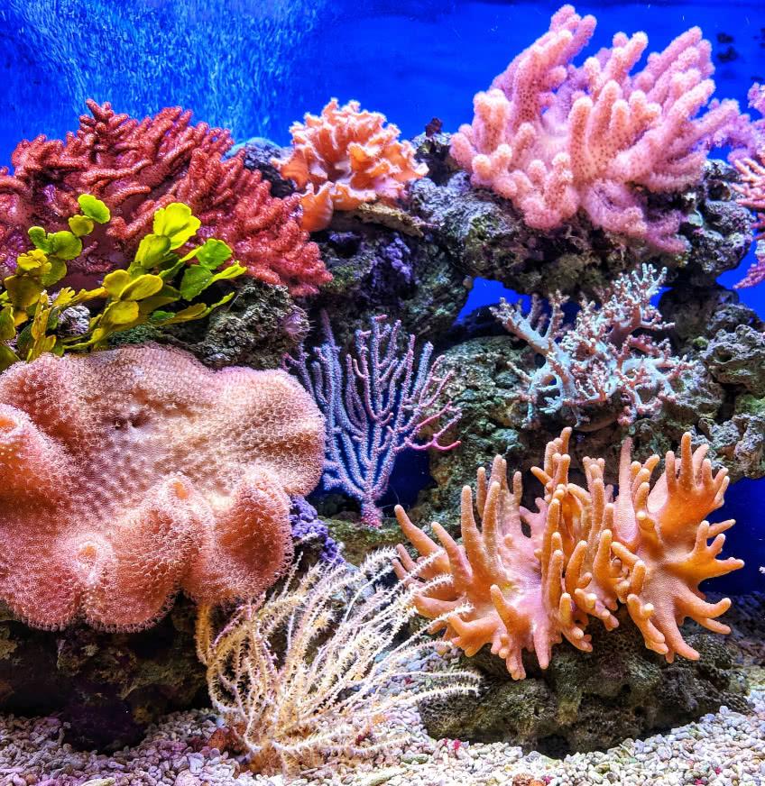 домашний морской аквариум одесса фото справа