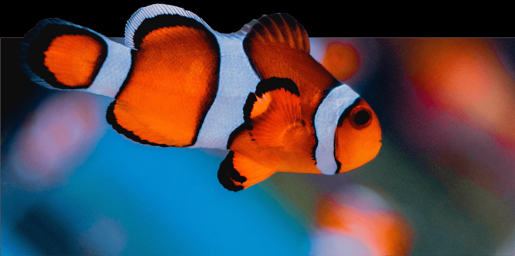 домашний морской аквариум одесса