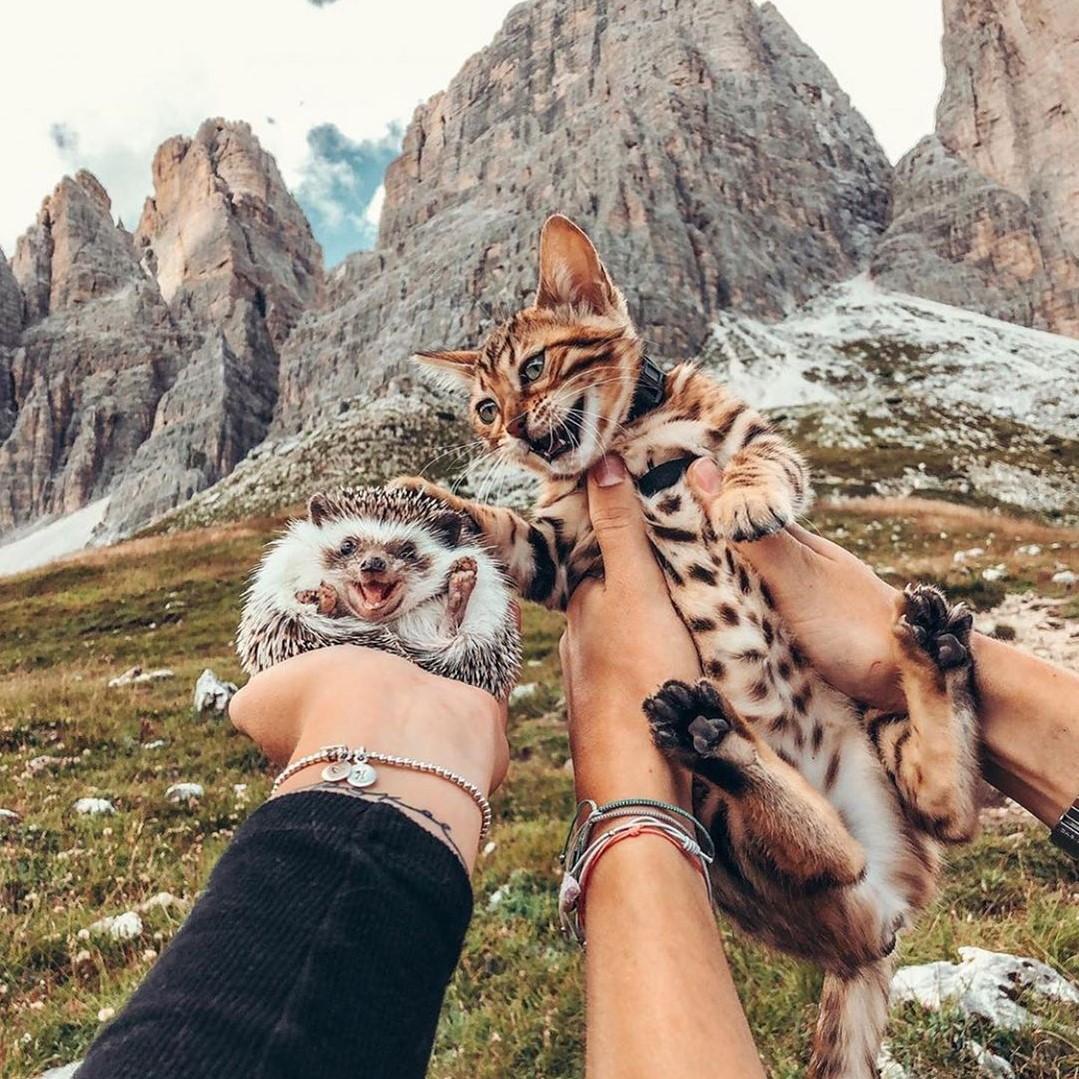 Еж Герби и котенок Одри