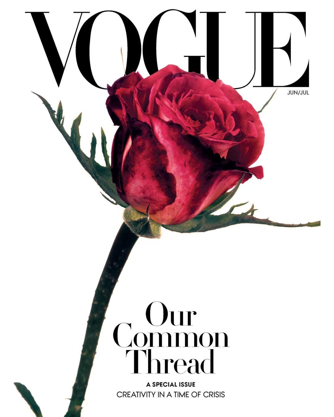 Vogue с розой