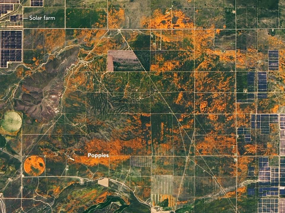 Снимок поля сделанный со спутника