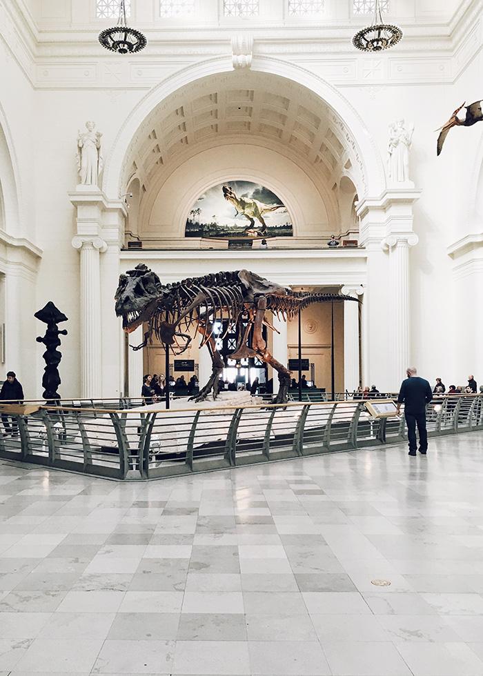 Динозавр в музее фото