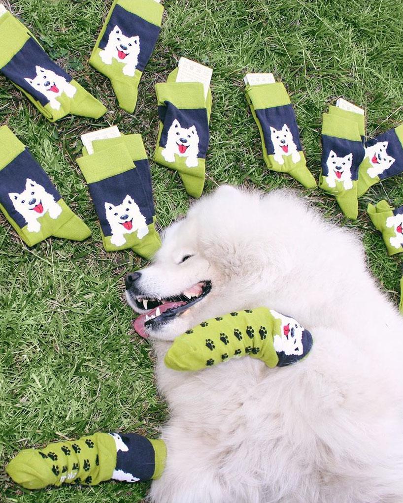 Собака в носках