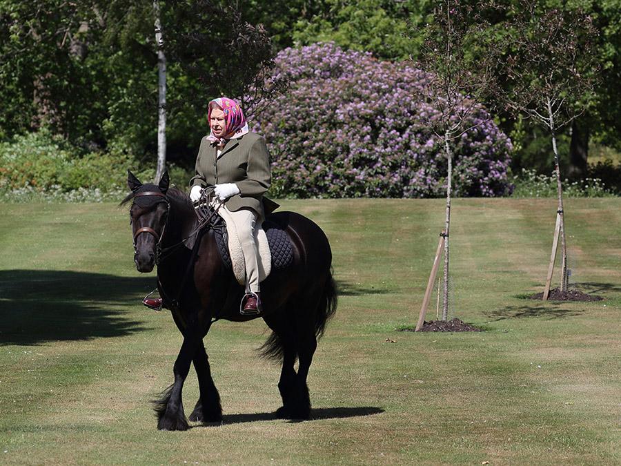 Женщина на лошаде