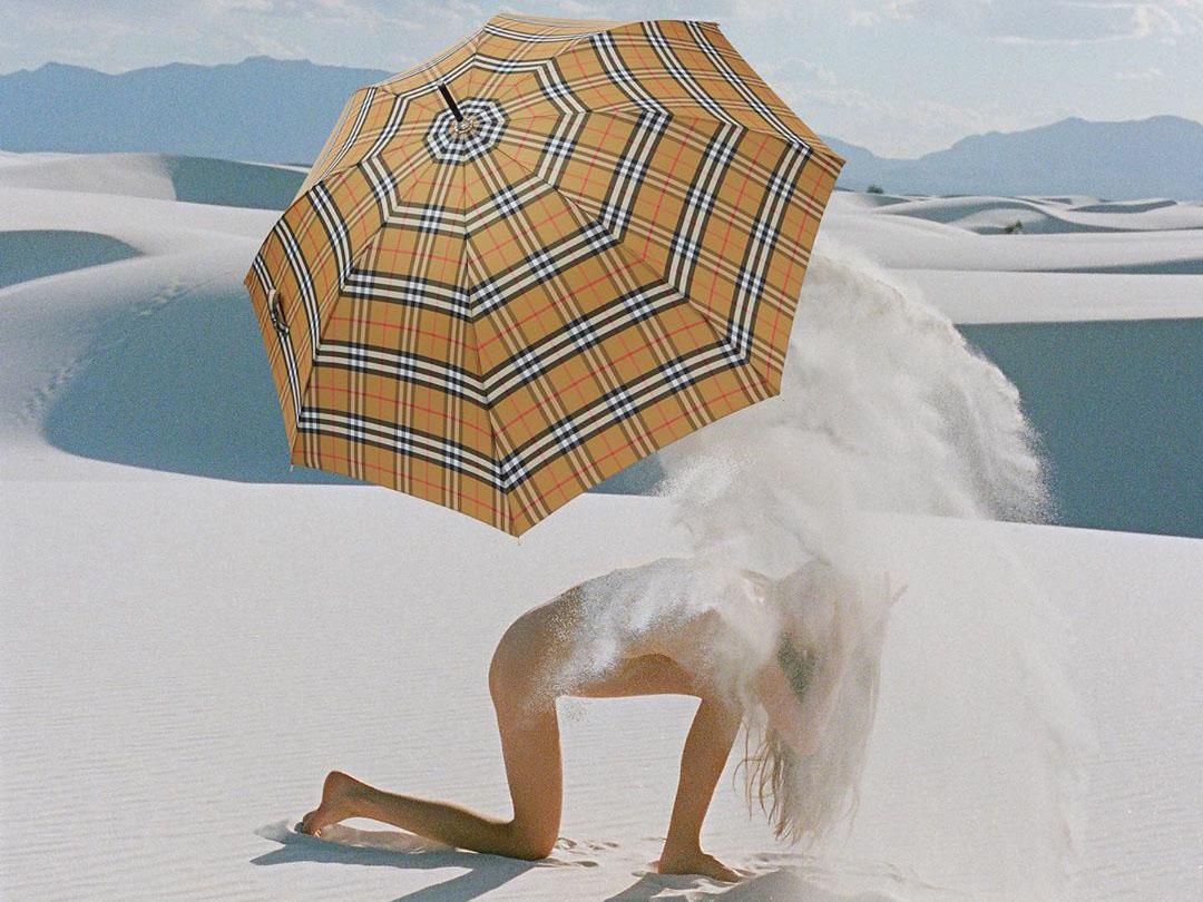 Synchrodogs фото