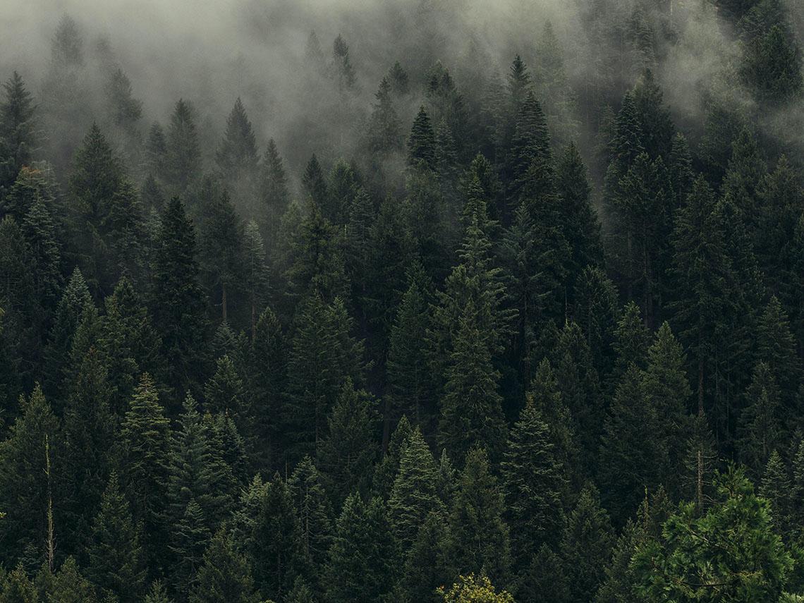 Лес туман фото