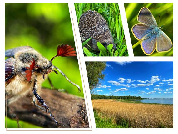 Центр изучения дикой природы «Озеро Супой»